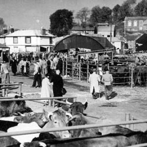 catlte-market-1