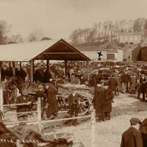 cattle-market-4